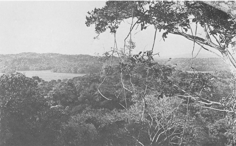 View of Fairchild Point from the canopy west of the Laboratory Clearing & General Climatic Features