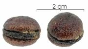 Unonopsis pittieri seed-wet