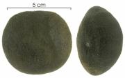 Omphalea diandra seed-wet