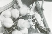 Paullinia rugosa (Paullinia rugosa)