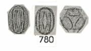 Platypodium elegans
