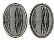 Strychnos darienensis
