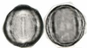 Clidemia octona
