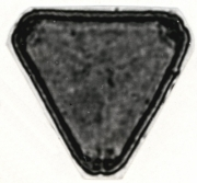 Serjania trachygona