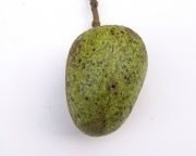 Annona glabra Fruit