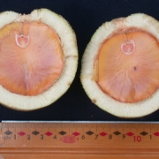 Licania fasciculata Fruit