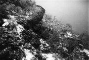 Underwater Marine life