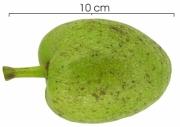 Annona glabra immature-fruit