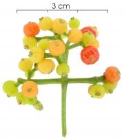Psychotria horizontalis immature-Infructescences