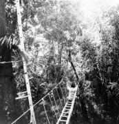Canopy Catwalk , BCI rainforest