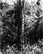 BCI palms