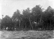 Palm trees scene, San Blas