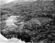 Deforestation in Soberania National Park