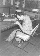 Dr. Theodore  Shneirla, Entomologist