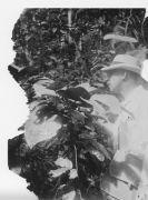 W.M. Wheeler, Entomologist BCI