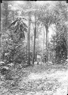 BCI forest scene (unidentified people)