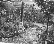 Ancon Plant House