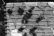 Bees in unkown experiment