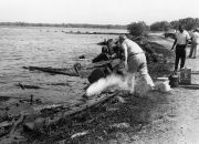Cleaning of oil spill