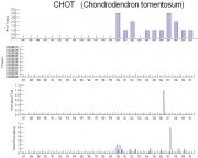 Chondrodendron tomentosum Timeseries