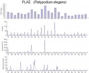 Platypodium elegans Timeseries